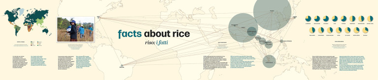 Facts about rice - infographic