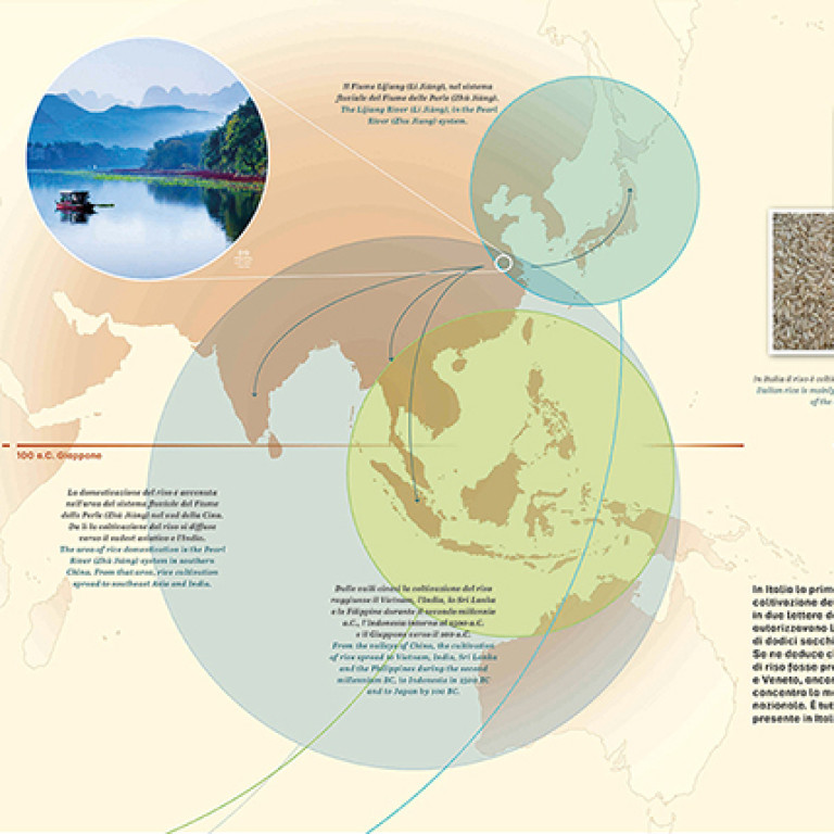 Story of a rice seed - infographic
