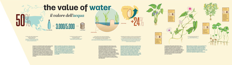 The value of water - infographic