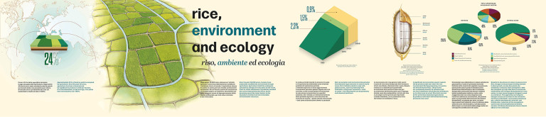 Rice, environment and ecology - infographic